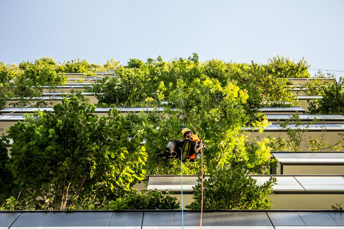 It's the building's responsibility to manage the trees and to care for the greenery in general