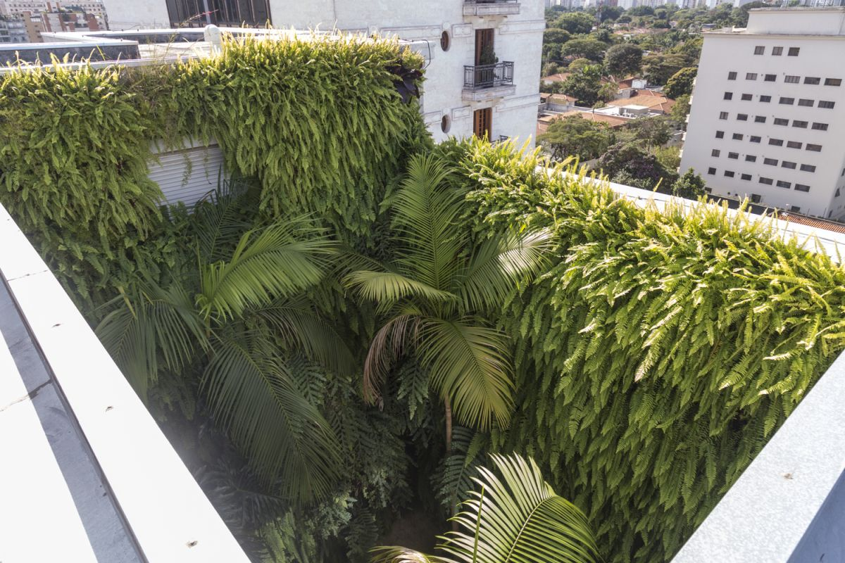 Surrounded by concrete block walls, the incredible forest looks like a small tropical escape.