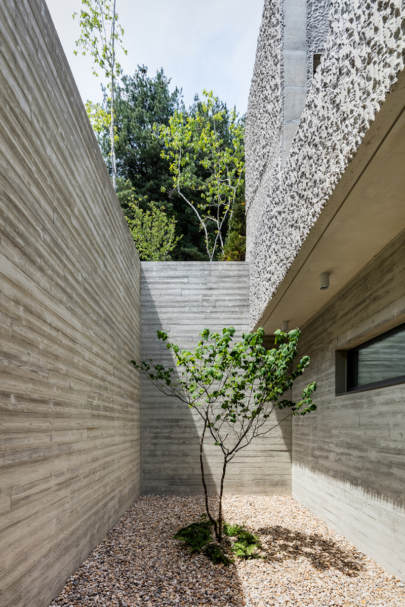 This tiny tree turns this space into a lovely little courtyard, establishing a pleasant connection between the indoor and outdoor areas