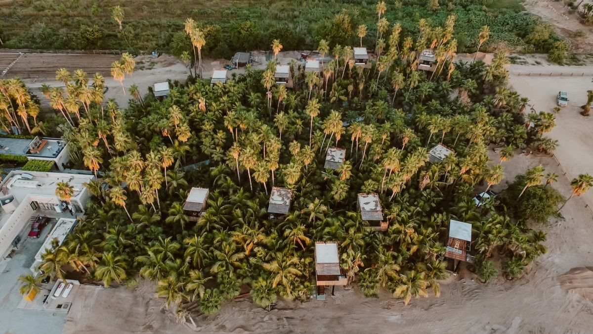 The 13 units are scattered among a grove filled with mango and palm trees