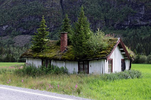 Norway Green Roofs (1)