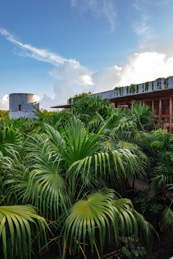 Lush greenery covers up the entire surrounding area, bringing the jungle right at the doorstep