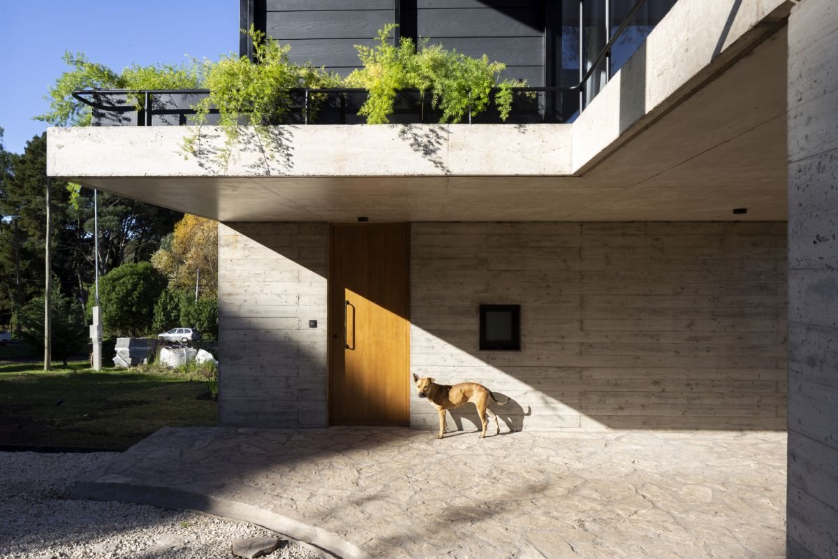 The main entrance is hidden on the side of the house and sheltered by the cantilevered terrace