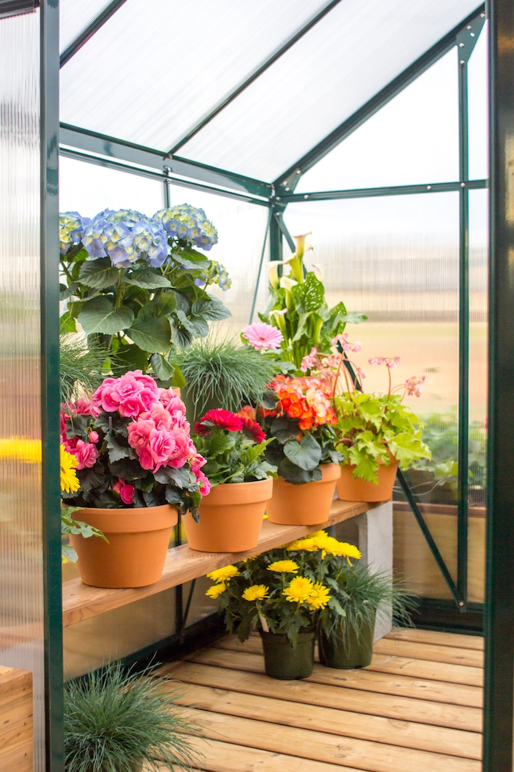 The interior of the greenhouse is quite spacious and can accommodate lots of potted plants