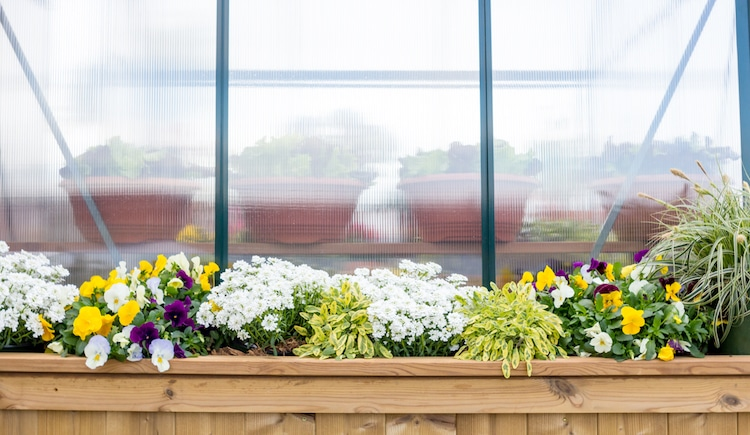 There are also planters all around the outside of the greenhouse, framing its walls