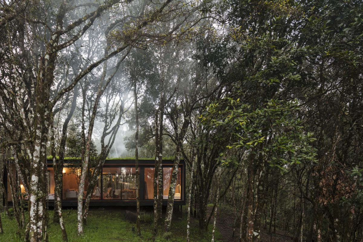 The flat roof is covered with vegetation, allowing the cabin to blend in and look more nature among the trees
