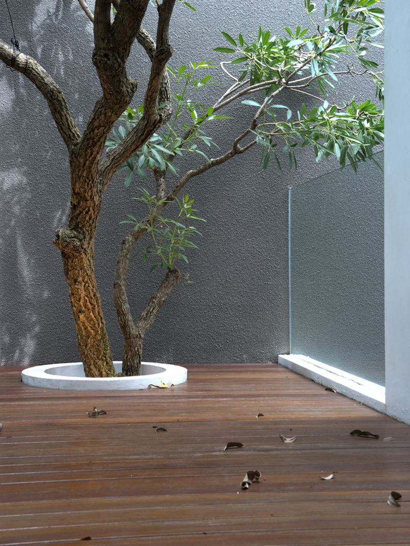 There's natural light coming from above and wood on the floor, surrounding the tree