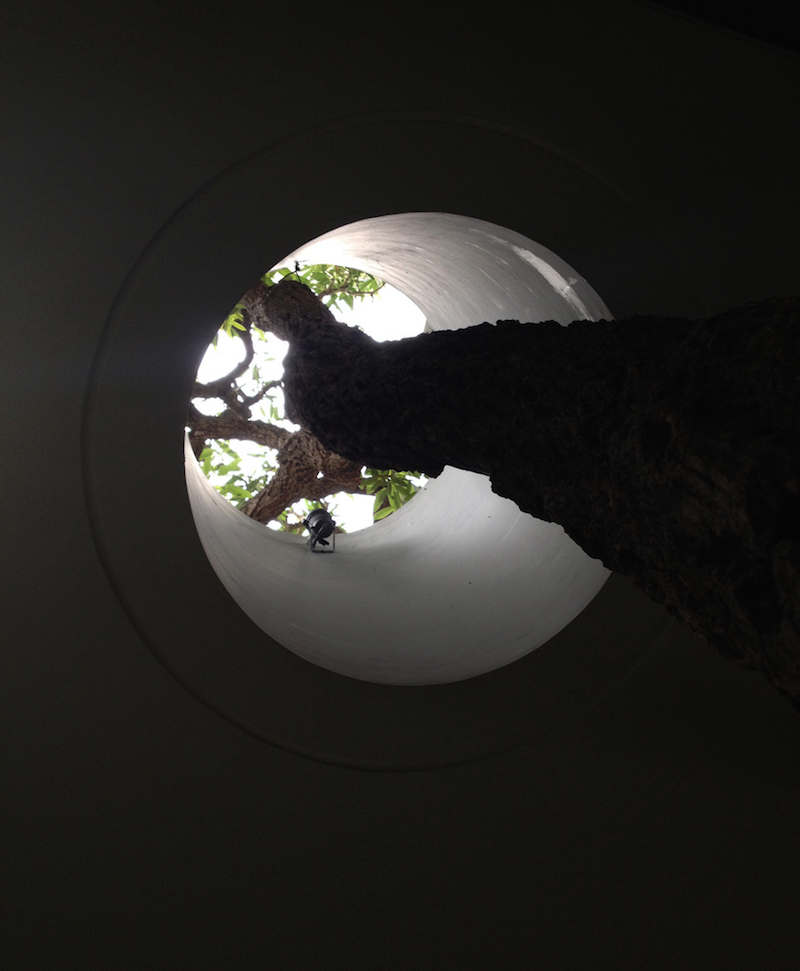 This is a look from below, showing the concrete floor which wraps itself around the tree, leaving it sufficient room to grow